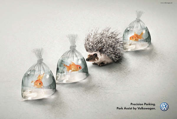 Hedgehog Auto Advertising