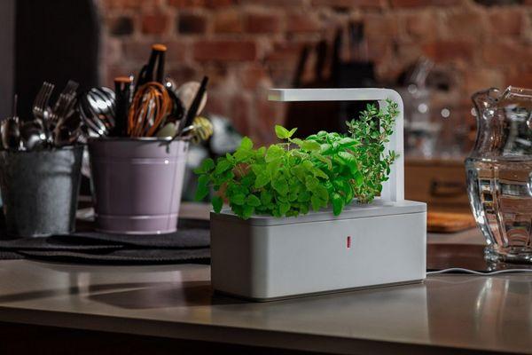 Smart Herb Gardens