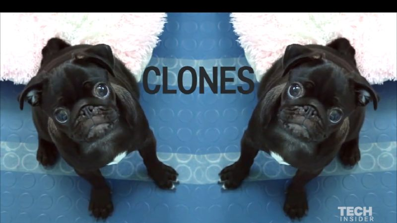 Dog-Cloning Services
