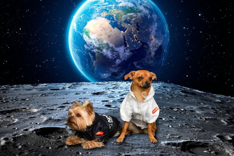 Space-Inspired Dog Clothing Lines