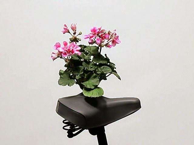 Bicycle Saddle Bouquets