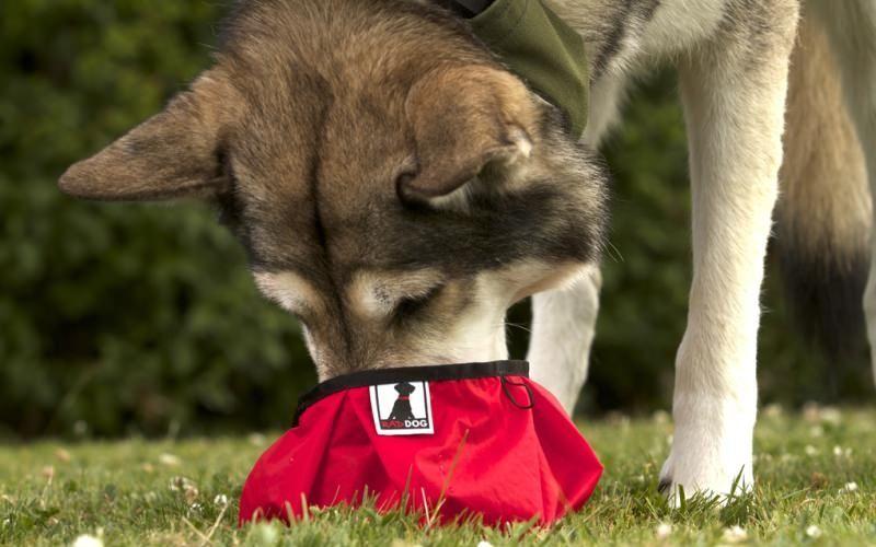Collapsible Travel Pet Bowls