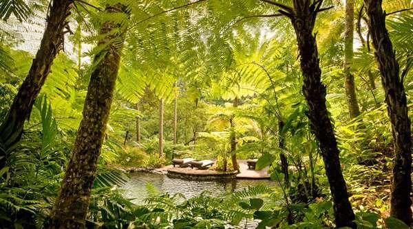 Jungle Pampering Getaways