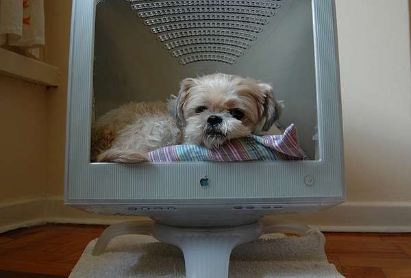 E-Waste Pet Beds
