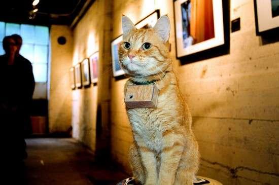 Feline Photographers