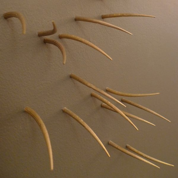 Whiskery Wall Embellishments