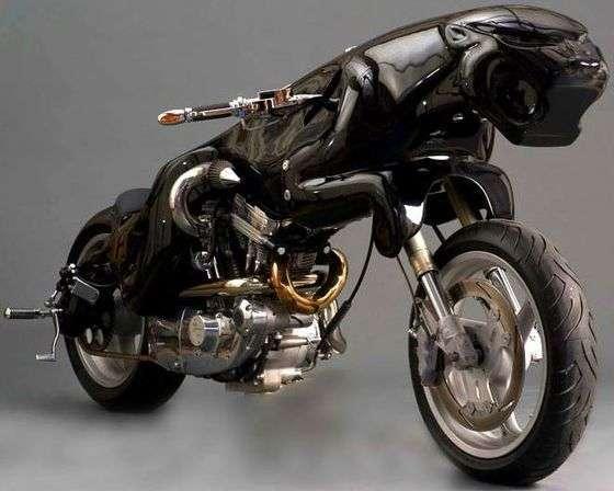Branded Big Cat Bikes
