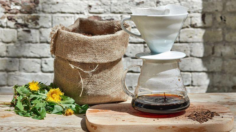 DIY Dandelion Coffee Brews