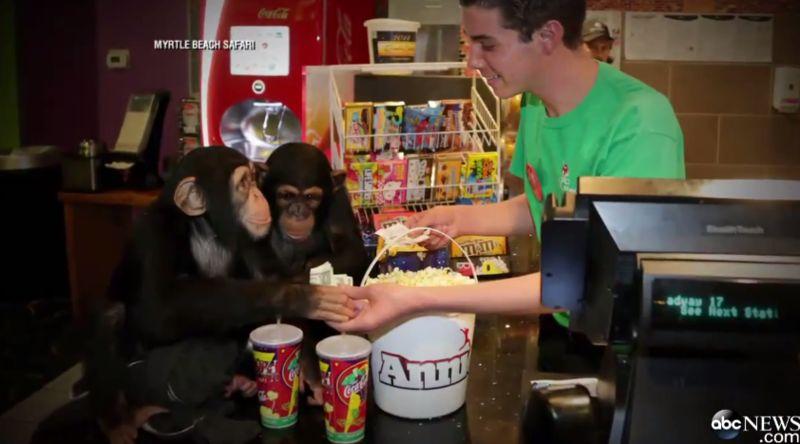 Monkey Movie Screenings