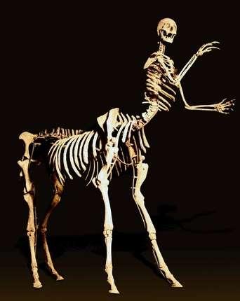Astrology Skeletons