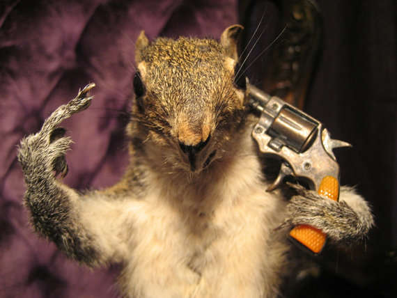 Disturbing Taxidermy Displays Dead Squirrel