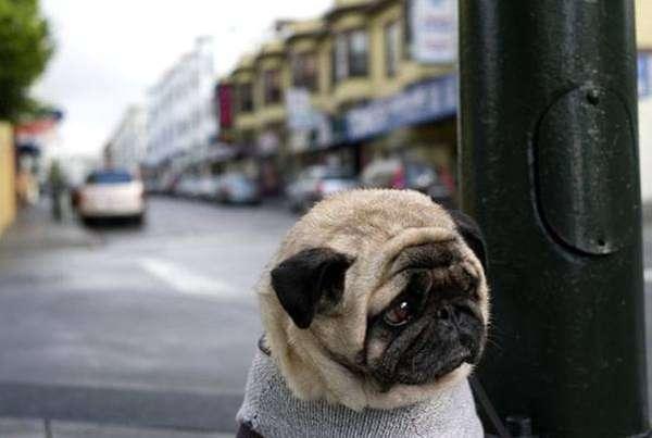 Depressed Dogs