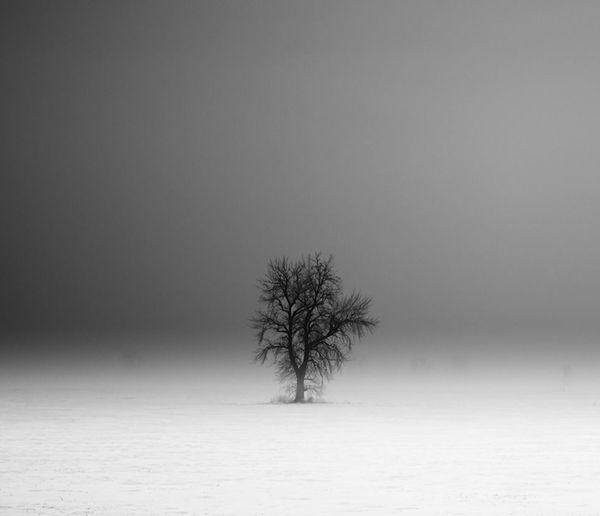 Evocative Grayscale Landscapes