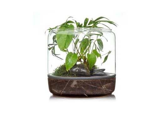 Glass-Enclosed Moss Sanctuaries