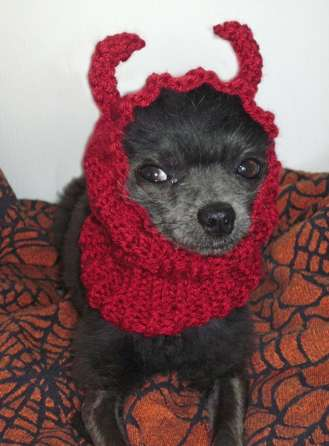 Devilish Pooch Scarves