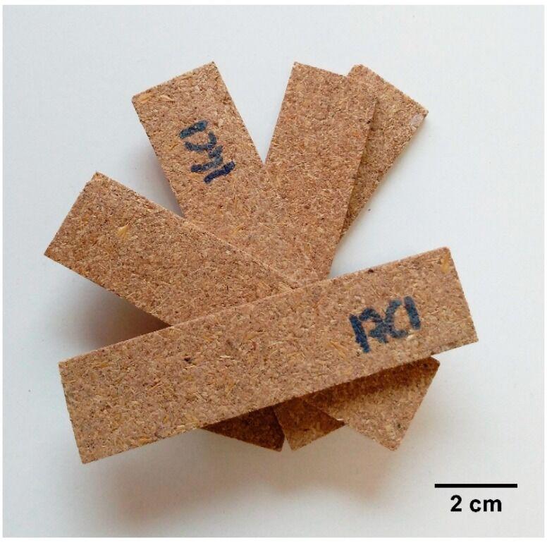 Biosourced Grain Disposable Trays