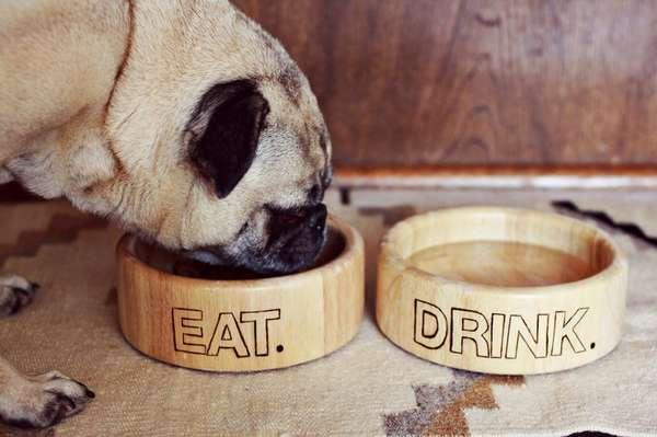 Diy Puppy Food Containers Dog Bowl Project