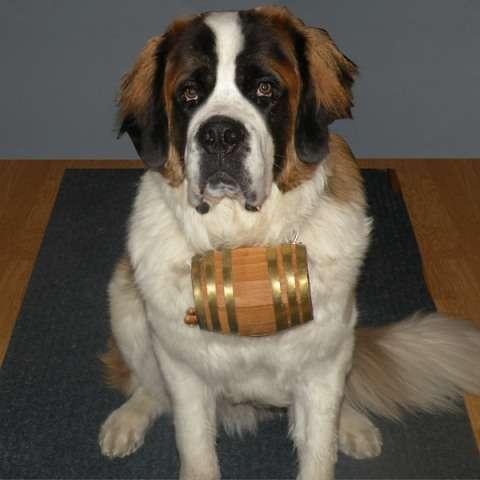 Canine Collar Flasks