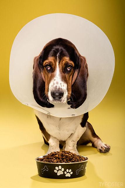 Dog Cone Editorials