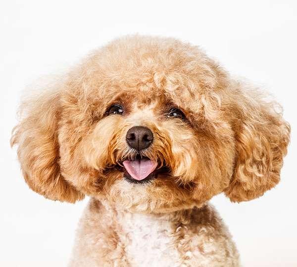 Personality-Ridden Pet Portraits