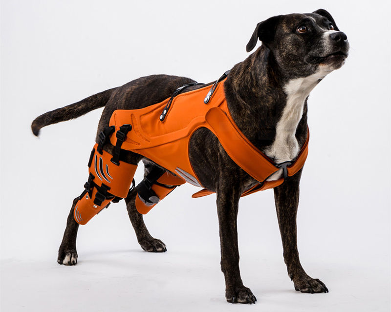 Healing Dog Harnesses