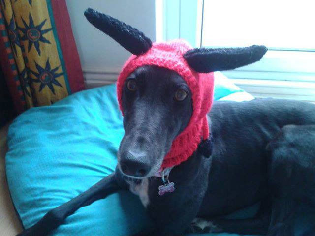 Knitted Greyhound Hats