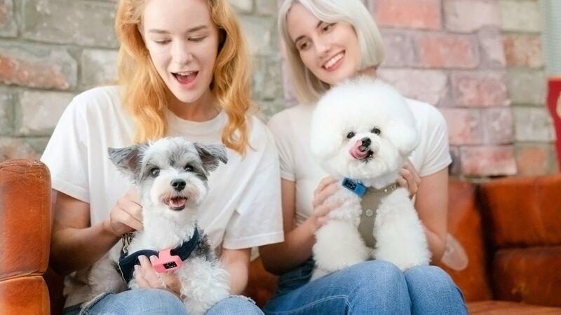 IoT Pet Health Trackers
