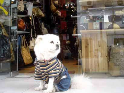 Dog Hired to Welcome Customers at Chinese Store
