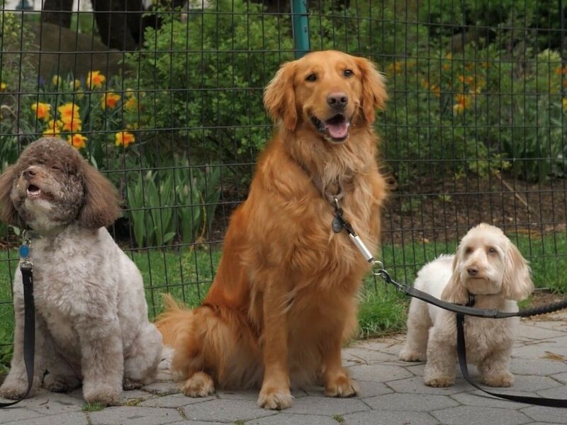Canine Leash Training Devices