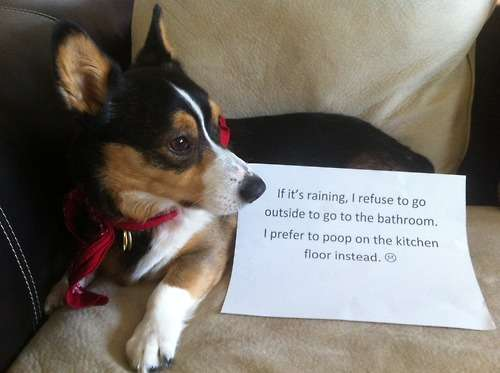 Pitiful Puppy Confessional Blogs