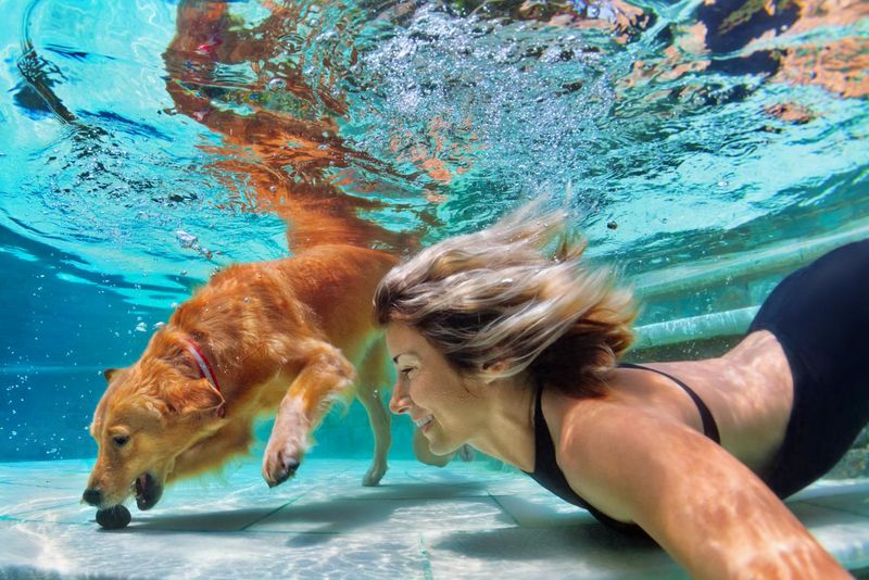 Swimming Pet Events
