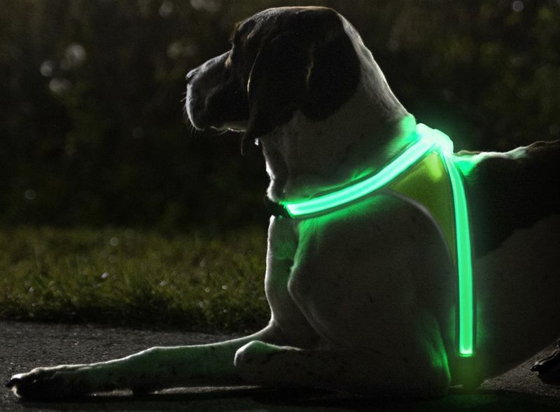 Illuminating Dog Vests