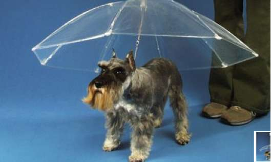 Upended Pet Parasols
