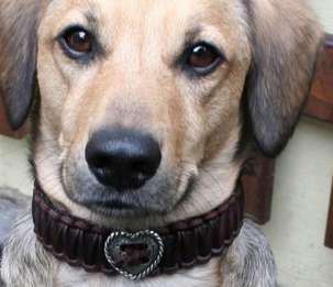 Hand-Braided Dog Collars