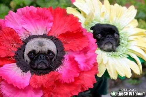 Flower Dogs