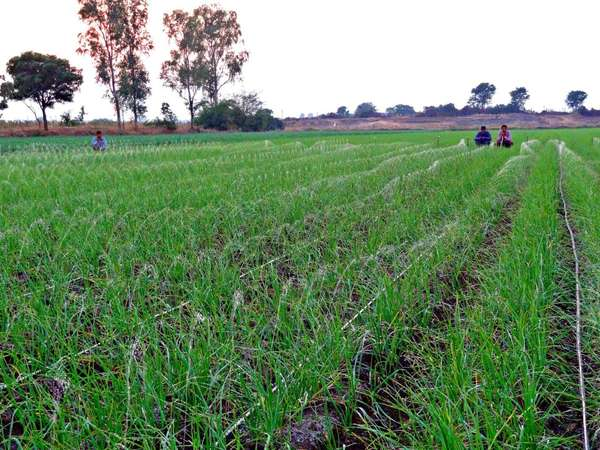 Social Enterprise Irrigation Systems