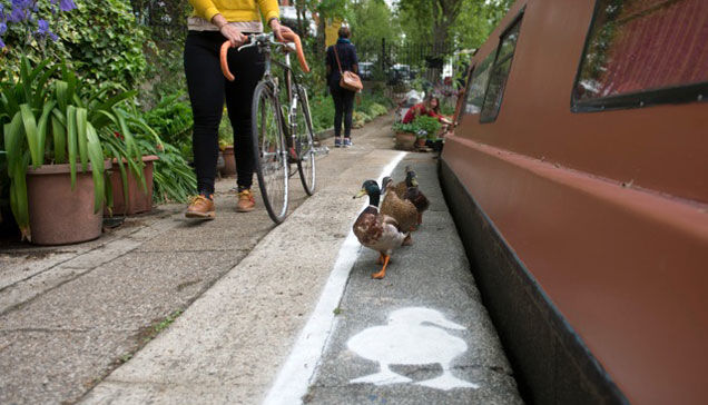 Designated Duck Lanes