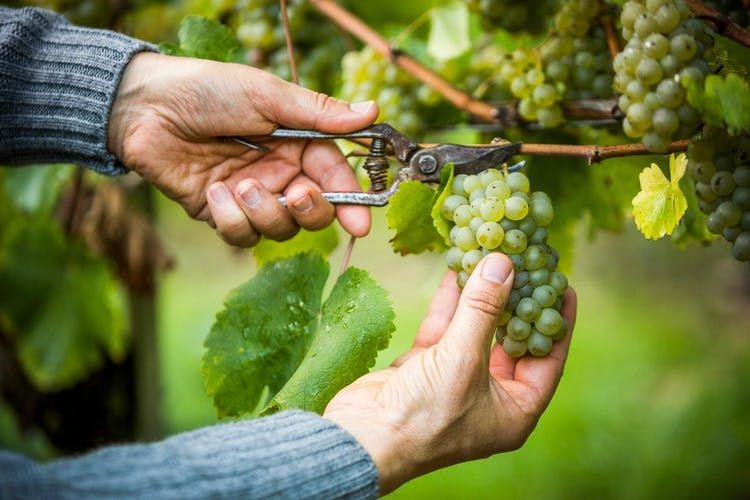 Charitable Wine Tours