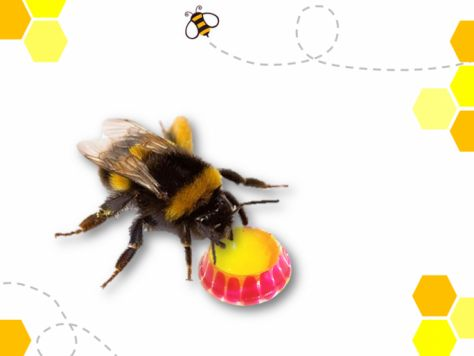 Bee First Aid Kits