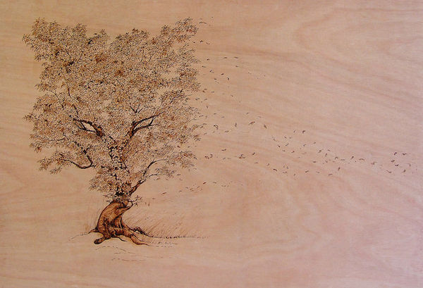 Burnt Wood Illustrations