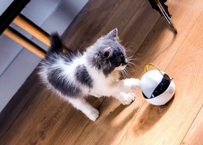 Interactive Cat Companion Robots