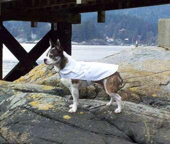 Luxury Eco Dogwear