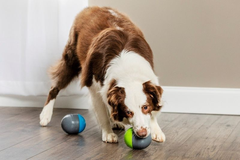Paired Pet Toys