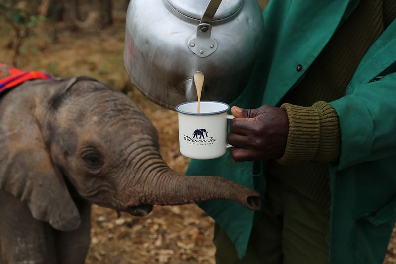 Elephant-Saving Teas