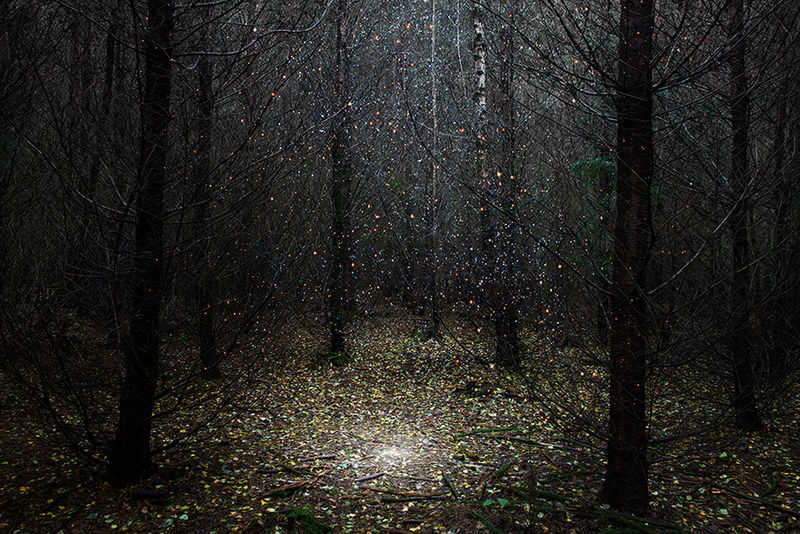 Starry Forest Photography