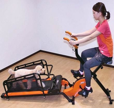 Canine Owner Workout Machines