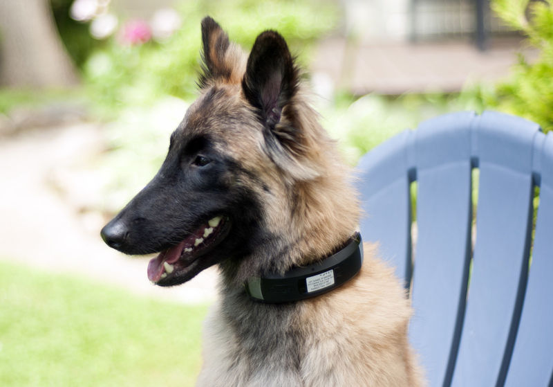 Multifaceted Smart Collars