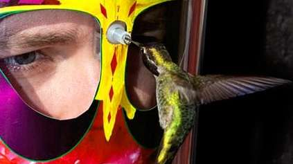 Hummingbird Headgear