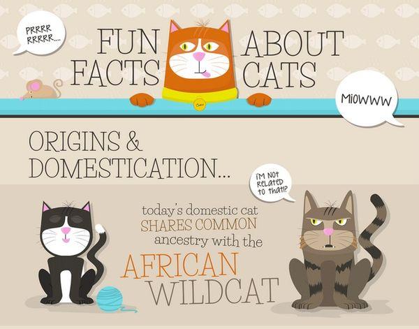 Insightful Feline Fact Charts