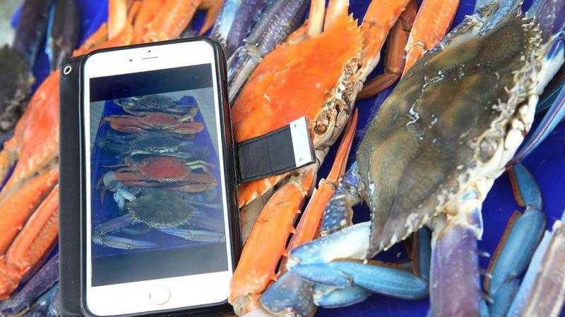 Fair-Trade Fishing Apps